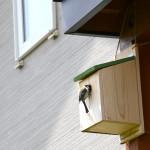 小鳥の巣箱作りから巣作り巣立ちまでの日記